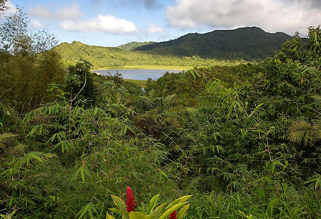 Vista del lago y la selva tropical Grand Etang