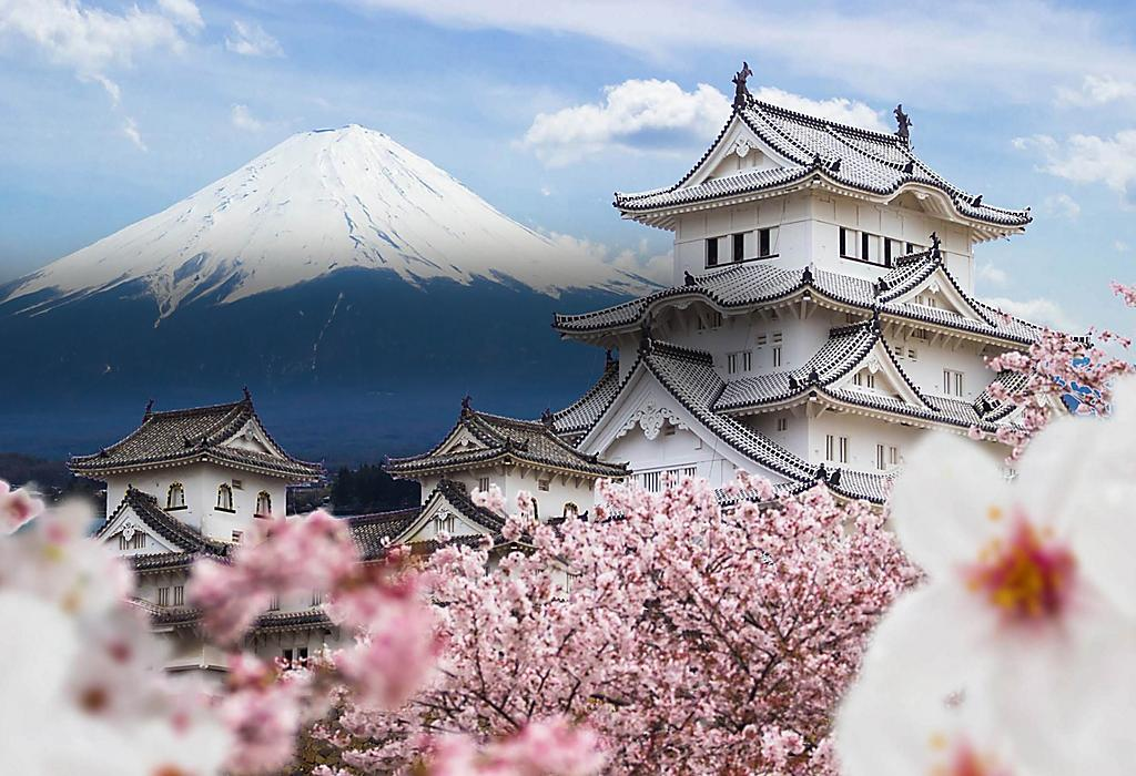 Kirschblüten um die Burg Himeji herum