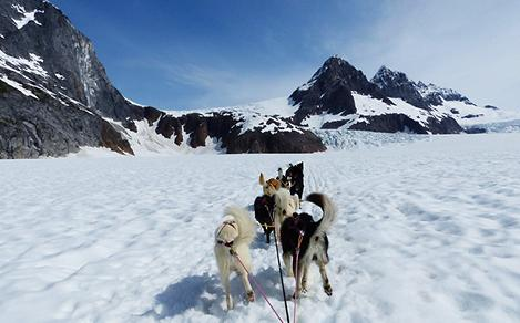 Alaska Dog Sledding Excursion