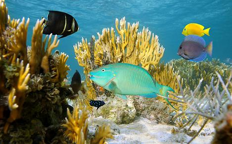Colorful Coral Reefs and Marine Life of the Bahamas