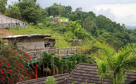 Nile Mile Houses in the Tropical Rainforest