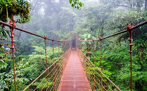 Rainforest Bridge in Costa Rica
