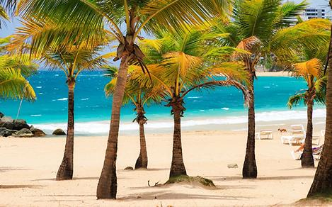 Southern Caribbean Beach with Palm Trees