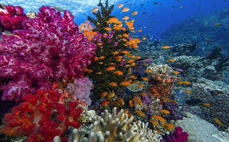 Underwater Paradise Tour in Vanuatu and Fiji