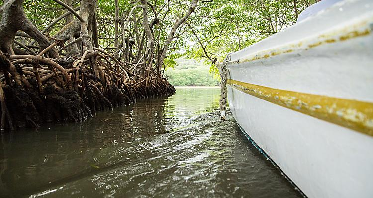 Roatan, Honduras, Caribbean, shore excursion, small boat tour through mangroves, mangrove trees, people in boat, family fun, adventure, view from side of boat