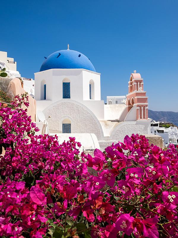A classic white Greek building with colorful pink flowers in Santorini, Greece