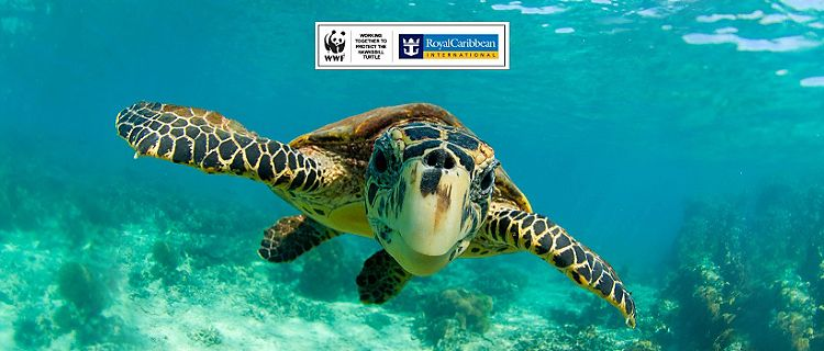 Royal Caribbean And WWF Breakthrough in Fight to Save Hawksbill Turtle from Extinction