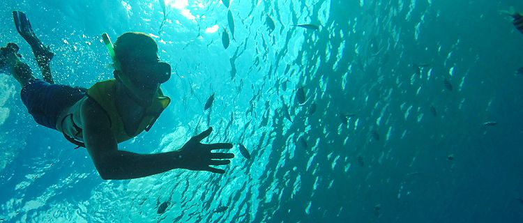 Snorkeling in the ocean.