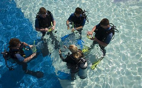 Group of Scuba Divers Getting Ready to Dive