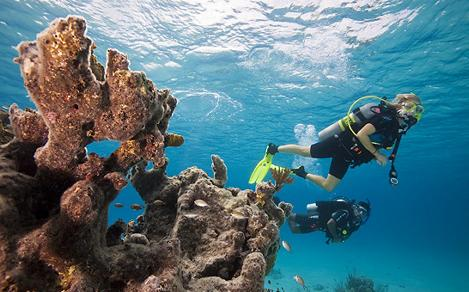 Scuba Certification Diving Underwater by the Coral