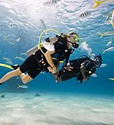 Scuba Certification Padi Diving Underwater with a School of Fish