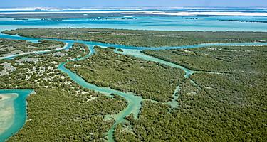 View from above of the mangroves in Abu Dhabi