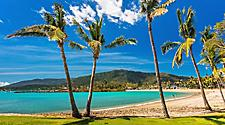 A sandy beach with palm trees in Airlie Beach, Australia