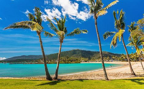 A sandy beach with palm trees in Airlie Beach, Australia