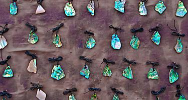 A collection of jewelry made of New Zealand's paua shells