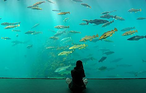 a person sitting in front of an aquarium display as fish swim by