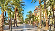A street lined with palm trees in Alicante, Spain