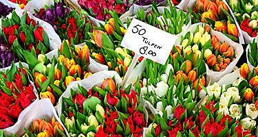 Tulips for sale at a flower market in Amsterdam, Netherlands