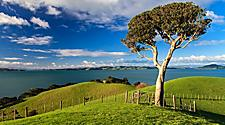 A tree at Duder Regional Park in Auckland, New Zealand