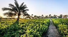 Sunrise on a green garden in Bahrain