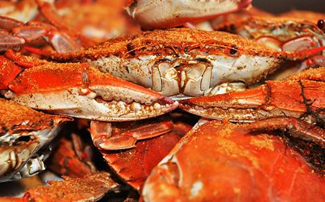 Maryland Baltimore Blue Crab with Old Bay Seasoning