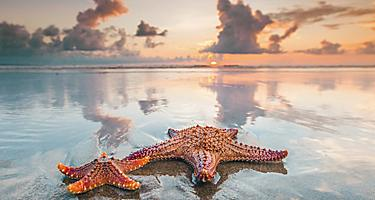 banana coast honduras starfish sunset beach