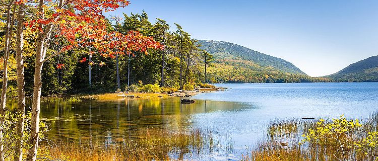 Lush Landscape at Acadia National Park in Bar Harbor, Maine