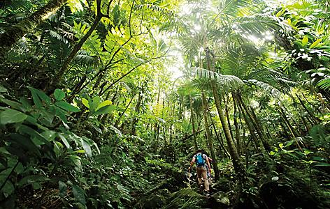 Couple hiking on a volcano trail in Basseterre rainforest