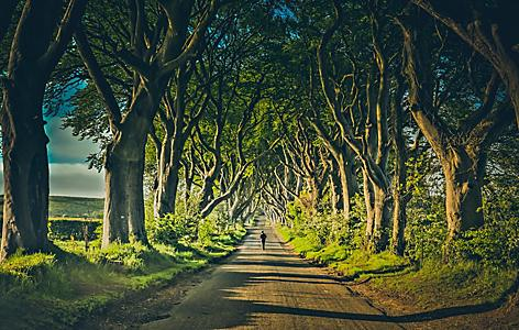 A man walking down the road at the famous dark hedges in Northern Ireland