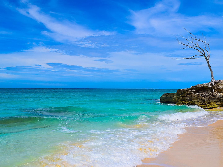 Bimini Bahamas Beach Rocks Tree Shore