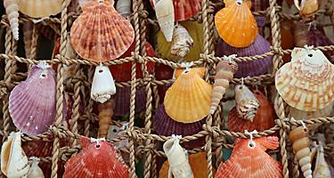 Sea shells found in markets while shopping in Boracay, Phillippines