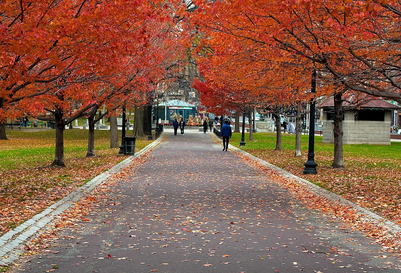 Boston Common Massachusetts Maple Oak Fall