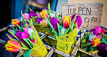 bremerhaven germany tulip bouquets