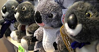 An assortment of Koala bear stuffed animals for sale
