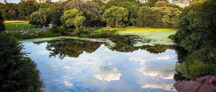 Pond at Central Park, New York