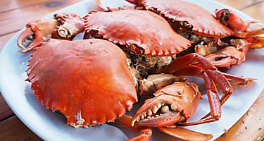 Steamed crabs on a plate