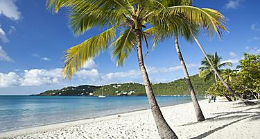 Palm trees and white sand, Magens Bay beach, Charlotte Amalie St. Thomas
