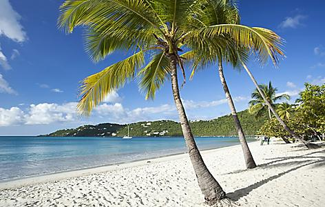 charlotte amalie st thomas magens bay beach palm trees