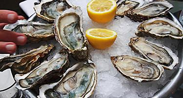 A dozen oysters on ice with a sliced lemon