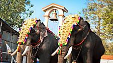 Elephants decorated for a parade in Cochin, India