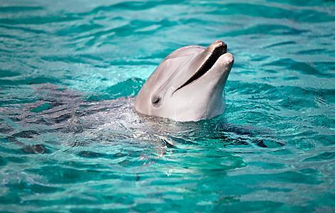 cozumel mexico dolphin swim
