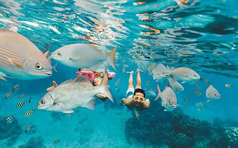 Kids snorkeling through a school of fish in Cozumel, Mexico