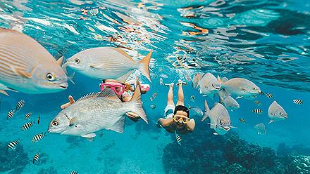Kids Snorkeling Through a School of Fish, Cozumel, Mexico