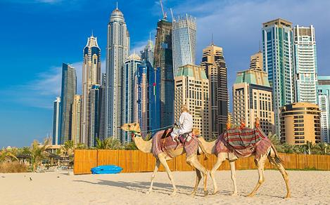 Riding camels along the beach in front of the Dubai Marina on a summer day in the United Arab Emirates
