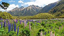 Beautiful landscape with mountains and wild flowers in Dusky Sound, New Zealand