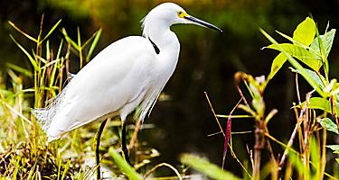 Close up of bird at the Everglades in Fort Lauderdale, Florida