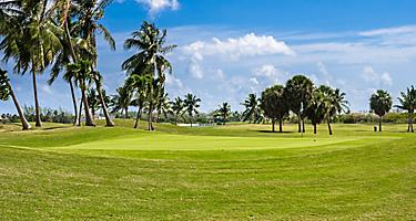 Palm trees in the North Sound Golf Club, George Town, Grand Cayman