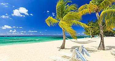 Palm trees swaying on the Seven Mile Beach, George Town, Grand Cayman