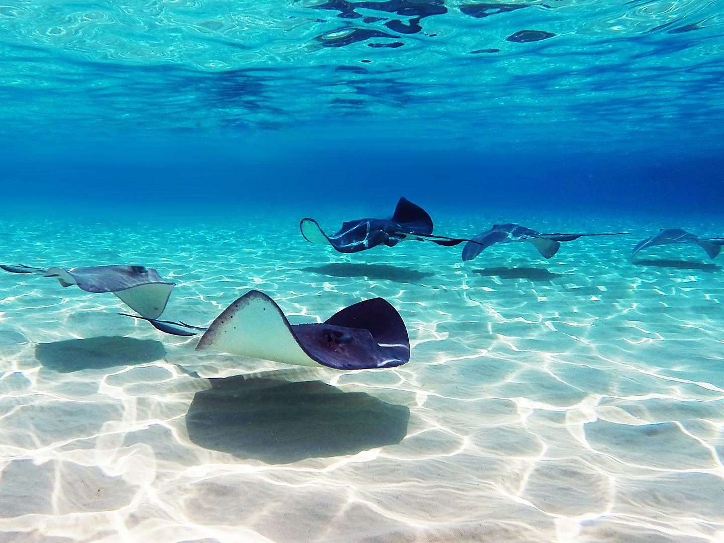 George Town, Grand Cayman, Stingray City