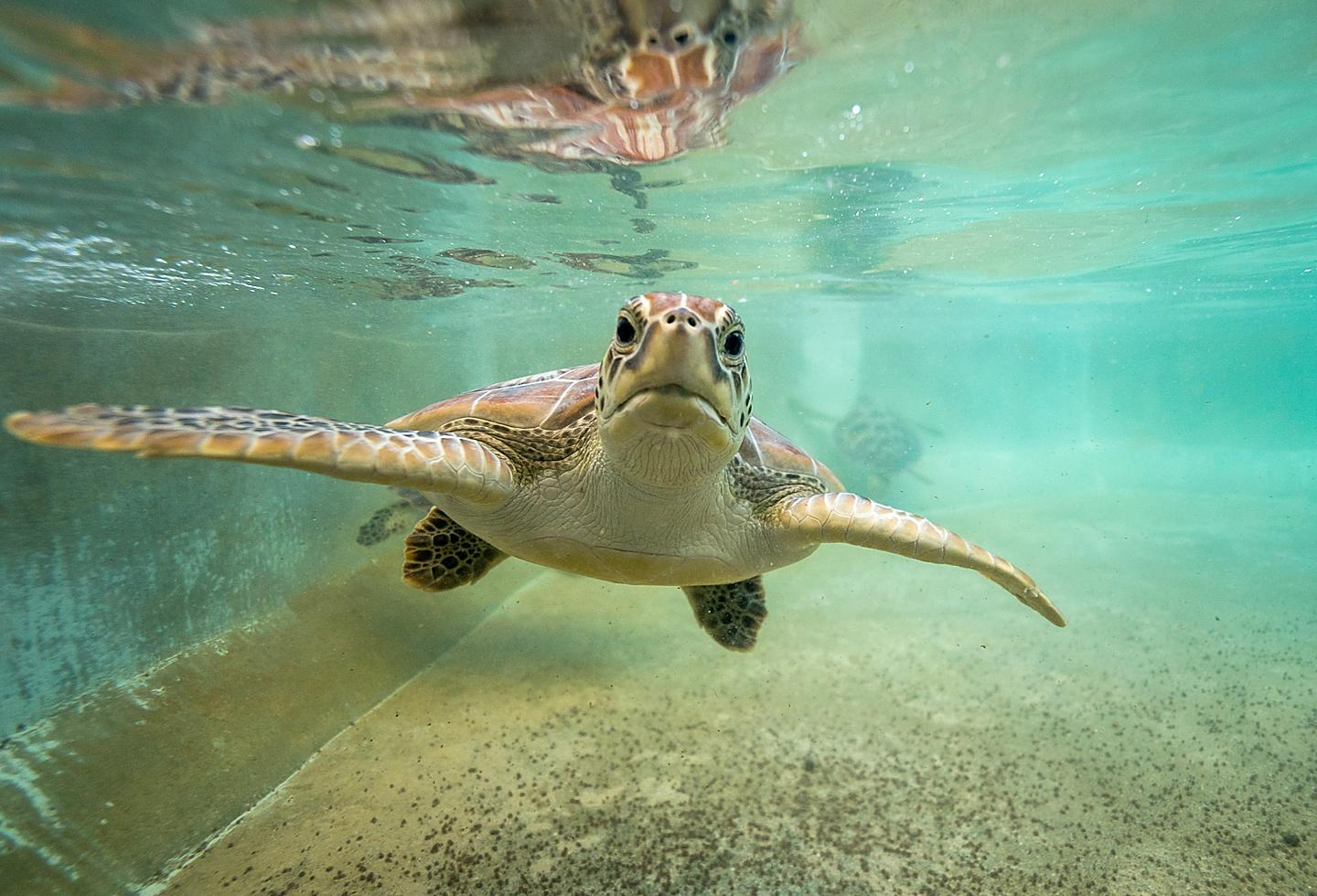 Swimming with the Turtles in Grand Cayman